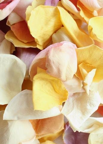 Biodegradable Freeze Dried Rose Petals in Pastel Colors - 8 Cups