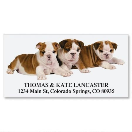 English Bulldog Puppies Personalized Return Address Labels- Set of 144, Large Self-Adhesive, Flat-Sheet Labels, By Colorful ()