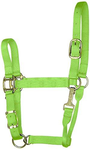 Hamilton 1-Inch Nylon Adjustable Quality Halter with Chin Snap for 800 to 1100-Pound Horse, Average, Lime ()