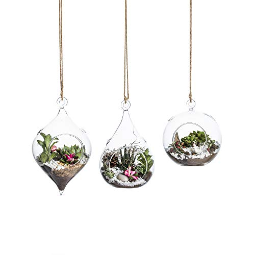 terrarium containers glass - 9