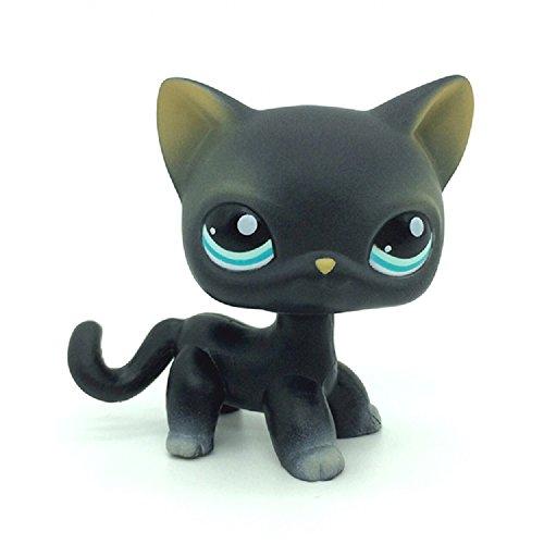 Best lps black cat blue eyes list