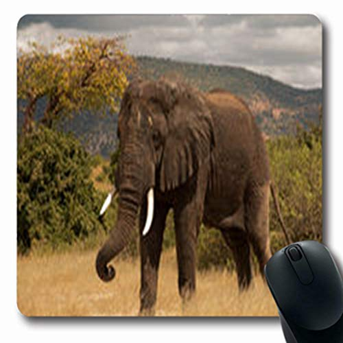 (Pandarllin Mousepads Ivory Large African Elephant Being Outdoor Playful Wildlife Africa Nature South Oblong Shape 7.9 x 9.5 Inches Oblong Gaming Mouse Pad Non-Slip Rubber Mat )