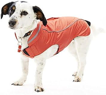 buster softshell jacke hund