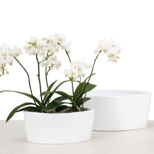 Scheurich Orchideentopf Oval Panna (25 cm)