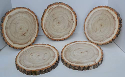 """Balm of Gilead Wood Slices 8"""" to 9"""" x 1"""" Kiln Dried & Sanded 10 Pack"""