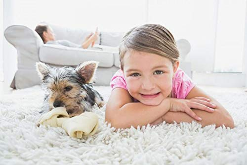 Pet Stain And Odor Removers