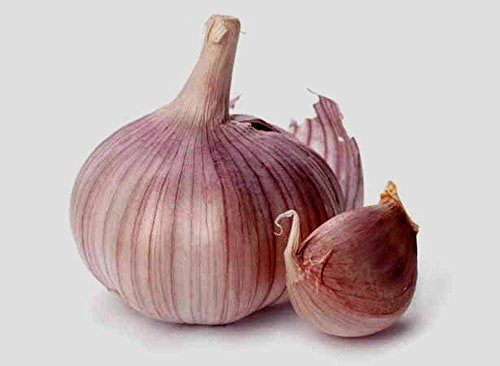 GARLIC BULB (5 Bulbs), FRESH SIBERIAN HARDNECK GARLIC BULB FOR PLANTING AND GROWING YOUR OWN GARLIC OR EATING