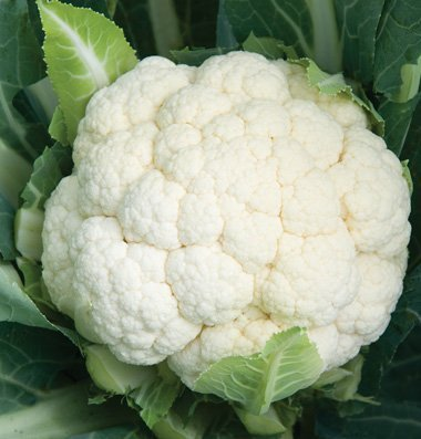 David's Garden Seeds Cauliflower Skywalker DS2593 (White) 25 Organic Hybrid Seeds