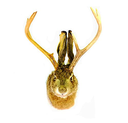 Jackalope Professional Taxidermy Mounted Animal Statue for sale  Delivered anywhere in USA