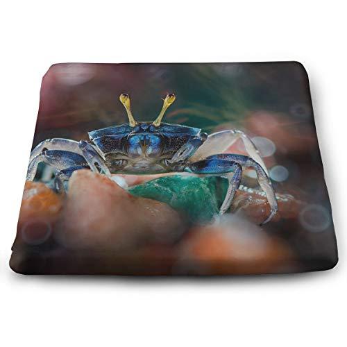 Comfortable Seat Cushion Chair Pad Blue Stone Crab Perfect Memory Foam Cushions Lighten The Bumps