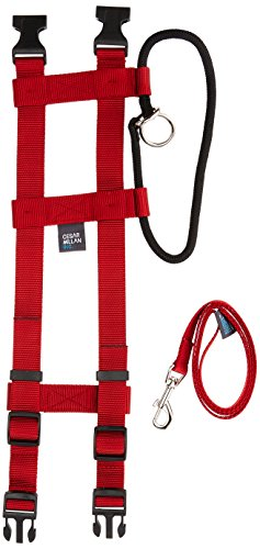 Illusion Dog Collar & Leash Set: By Dog Whisperer Cesar Millan (Medium Red)