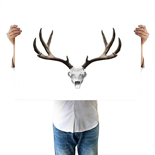 Antlers Decor Bedroom A Deer Skull Skeleton Head Bone Halloween Weathered Hunter Collection canvasses 16