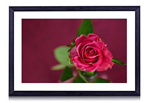 Valentines Day Pink Rose - Art Print Black Wood Framed Wall Art Picture
