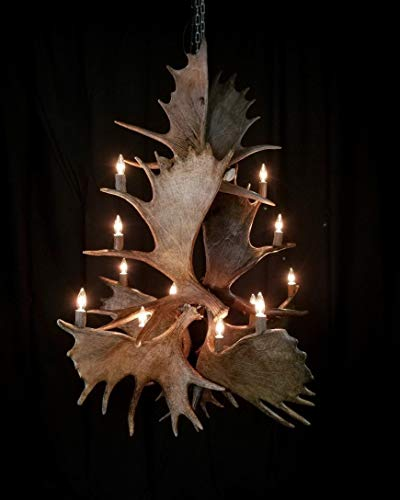 (Real Natural Shed, Staggered Moose DELUXE Antler Chandelier, 12 Lights. Elegant Handmade, Rustic Antler Art. With real Elk antler covers)