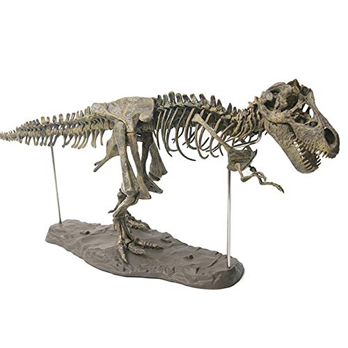 ZOOARTS 2019 T-Rex Tyrannosaurus Rex Skeleton Dinosaur Animal Collector Decor Model Toy-for Child Birthday Xmas Gifts -