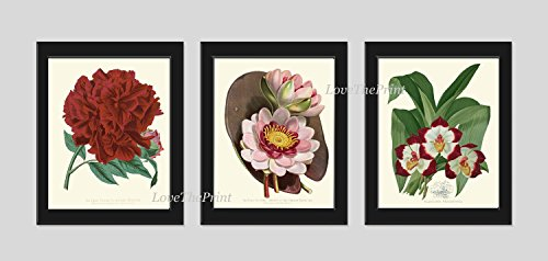 Botanical Print Set of 3 Antique Beautiful Flowers Red Burgundy Peony Pink Water Lily Tropical Orchid Flowers Nature Plants Home Room Decor Wall Art Unframed PAX