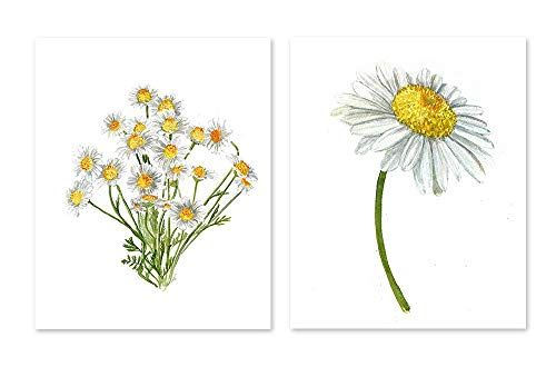 Gerber daisy art #A038 - set of 2 prints(8x10).Gerber daisy wall art.Daisy art.Daisy wall art.Gerber daisy painting.Gerber daisy pictures.White flowers wall decor