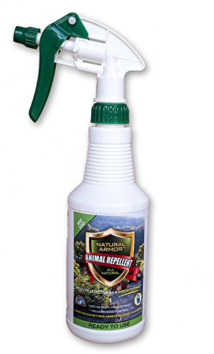 Natural Armor Repellent Spray for Rodents & Animals. Cats, Rats, Squirrels, Mouse & Deer. Repeller & Deterrent for Dogs, Critters, Mice, Raccoon & Skunk Mint Pint Ready To (Critter Repellers)