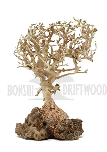 Bonsai Driftwood Aquarium Tree (5 Inch Height) Natural, Handcrafted Fish Tank Decoration | Helps Balance Water pH Levels, Stabilizes Environments | Easy to Install | BSS ()