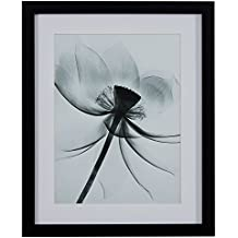 "Rivet Matted Flower X-Ray Photograph, Black Frame, 18"" x 22"""