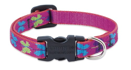 "LupinePet Originals 1/2"" Wing It 8-12"" Adjustable Collar for Small Dogs"