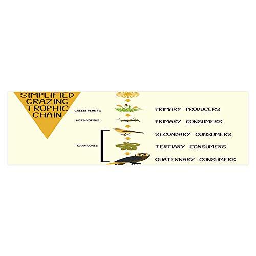 Dragonhome Aquarium Background Sticker Simplified Graz trophic Chain