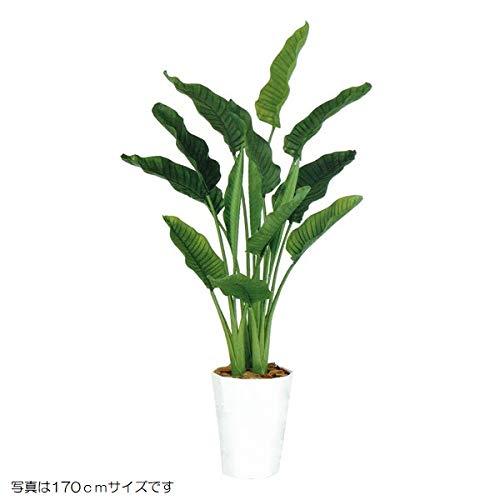 人工観葉植物 ストレリチアオーガスタMIX200 高さ200cm dt99172 (代引き不可) インテリアグリーン 造花 B07SYY1G7Z