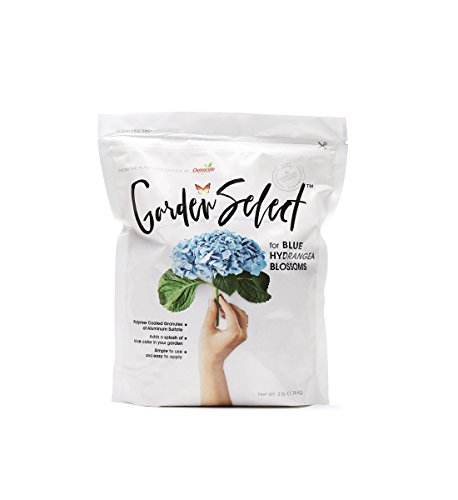 Garden Select for Blue Hydrangea Blossoms