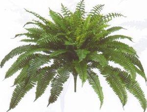 (One Designer Quality 50 Inch Spread 92 Branch Artificial Silk Boston Fern Bush)