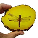 Amber Fossil Insect,Museum Grade Specimen,Artificial Amber Natural Insect