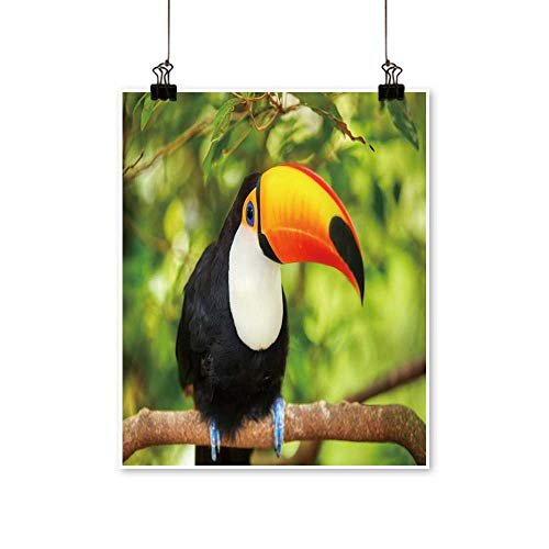 Artwork for Office Decorations Colorful Tucan in The Aviary Canvas Living Room,24