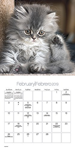 2019 Cuddly Kittens/Gatitos cariñositos Wall Calendar (English and Spanish Edition): Trends International: 9781438860664: Amazon.com: Books