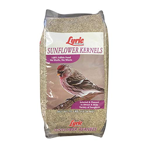 Lyric 2647446 Sunflower Kernels - 25 lb. (Sunflower Wild Bird Seed)