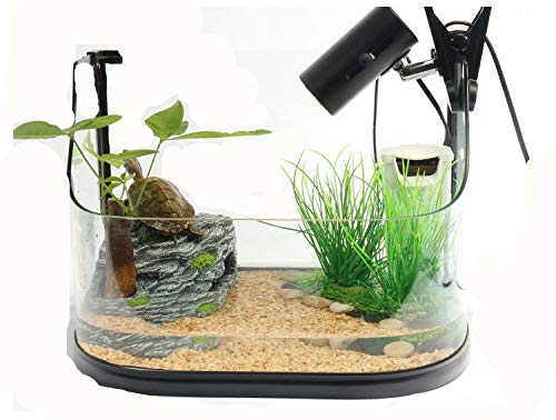 M Turtle Tank with Sundeck Glass Tank Contains 36 Items of Giveaway,M