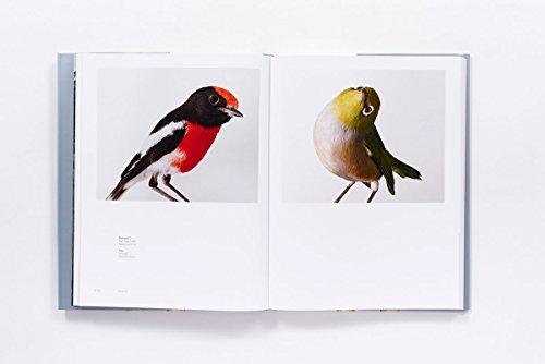 Bird Love by ABRAMS (Image #3)