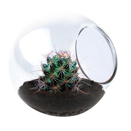 Tiny terrarium dunecraft