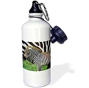 3dRose wb_9859_1 Common Zebra Kenya Africa 2 Sports Water Bottle, 21 oz, White