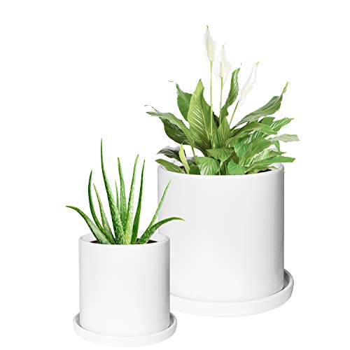 TIMEYARD Plant Pots Indoor, Modern Planters with Drainage Hole and Tray, Matte White Ceramic Cylinder Planters, 4in 6in for Flowers, Succulents, Mid Century Home Garden Decor, Set of 2 (White Planters Large)