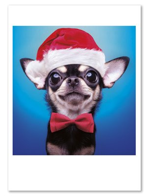 Chihuahua Hat & Bowtie Smiling Box 12 Holiday Christmas Cards