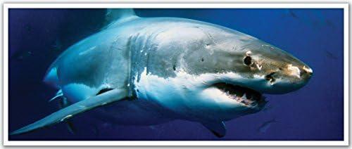 Jp London Pan5023 Ustrip Shark Attack Deep Blue Sea Aquarium