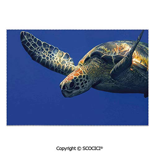SCOCICI Set of 6 Heat Resistant Non-Slip Table Mats Placemats Close Up Photo of Green Turtle at Sipadan Borneo Malaysia Cute Animal Under The Sea for Dining Kitchen Table Decor -