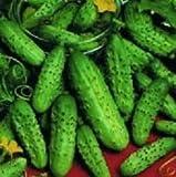 Cucumber Backyard Pickler 1,000 seeds