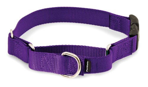 "PetSafe Martingale Collar with Quick Snap Buckle, 1"" Large, Deep Purple"