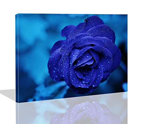 The Melody Art- Modern Giclee Prints Framed Flower Artwork Blue Rose Symbolizes Hope and Miracle Picture Print to Photo Printed Paintings on Canvas Wall Art Decor for Home Decorations 10 by 14 inch ()