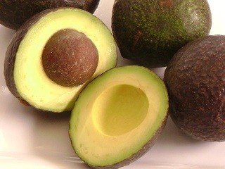 mexicola-avocado-tree-5-gallon
