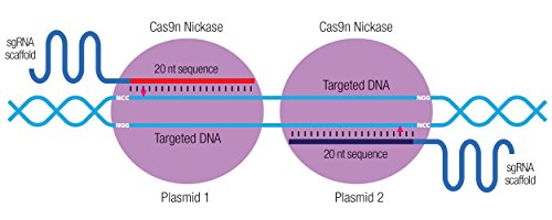 ET-2 Double Nickase Plasmid (m)