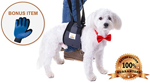 Veterinarian Approved Dog Support Harness + Hair Remover Glove - Dogs Sling Lift for Paralyzed Legs - Adjustable Straps - Mobility Rehabilitation for Injured Arthritis Elderly Disabled - Small breed by Pet Friendz