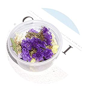 Sevem-D Epoxy Resin Uv Glue Crafts Natural Dry Leaves Flowers Material Manual Book Mark Jewelry Pendant DIY 115