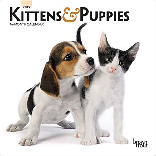 - 2019 Kittens & Puppies Mini Wall Calendar, More Dogs by BrownTrout