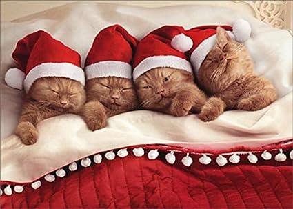 Cat Christmas.Amazon Com Kittens Nestled In Bed Avanti Cute Cat